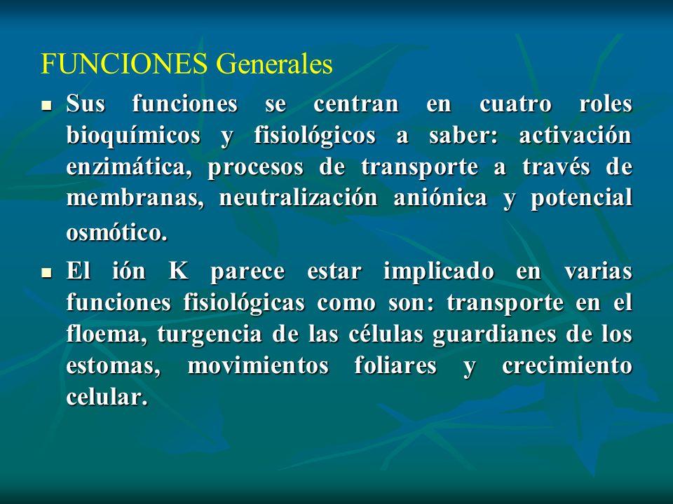 FUNCIONES Generales Sus funciones se centran en cuatro roles bioquímicos y fisiológicos a saber: activación enzimática, procesos de transporte a travé