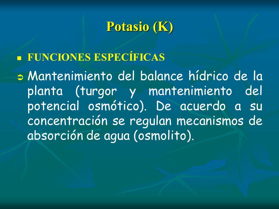 Potasio (K) FUNCIONES ESPECÍFICAS Mantenimiento del balance hídrico de la planta (turgor y mantenimiento del potencial osmótico). De acuerdo a su conc