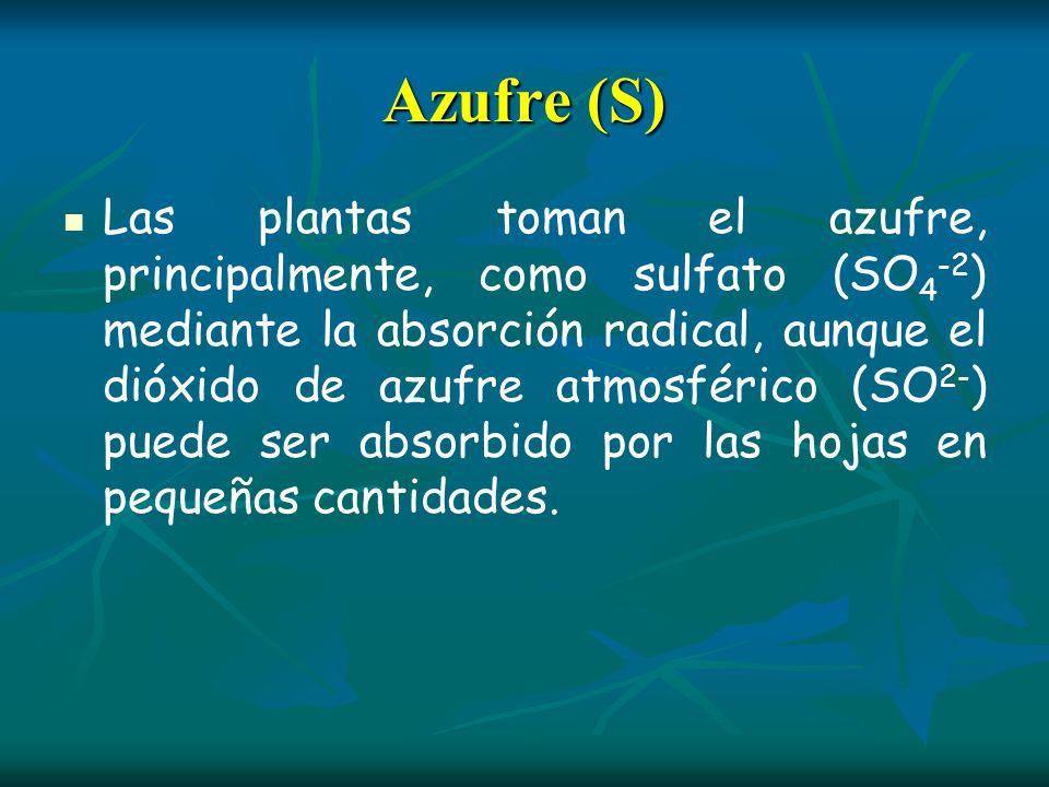 Azufre (S) Las plantas toman el azufre, principalmente, como sulfato (SO 4 -2 ) mediante la absorción radical, aunque el dióxido de azufre atmosférico
