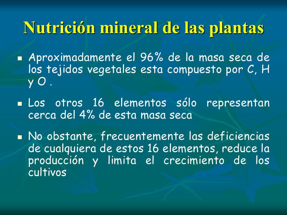 Nutrición mineral de las plantas Aproximadamente el 96% de la masa seca de los tejidos vegetales esta compuesto por C, H y O. Los otros 16 elementos s