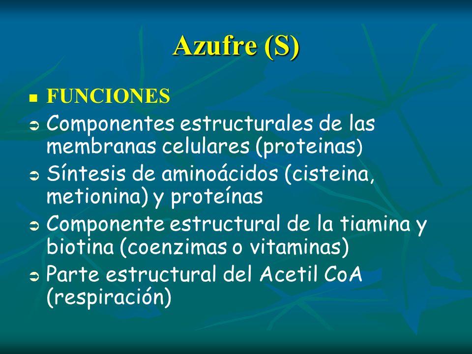 Azufre (S) FUNCIONES Componentes estructurales de las membranas celulares (proteinas ) Síntesis de aminoácidos (cisteina, metionina) y proteínas Compo