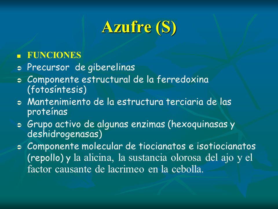 Azufre (S) FUNCIONES Precursor de giberelinas Componente estructural de la ferredoxina (fotosíntesis) Mantenimiento de la estructura terciaria de las