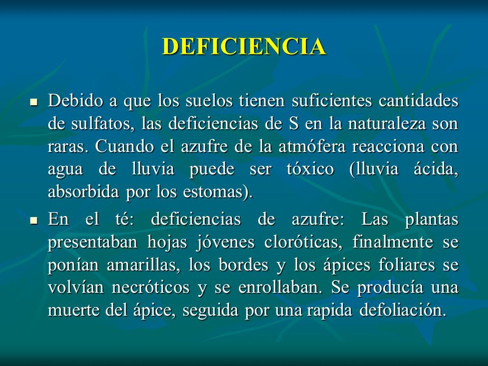 DEFICIENCIA Debido a que los suelos tienen suficientes cantidades de sulfatos, las deficiencias de S en la naturaleza son raras. Cuando el azufre de l