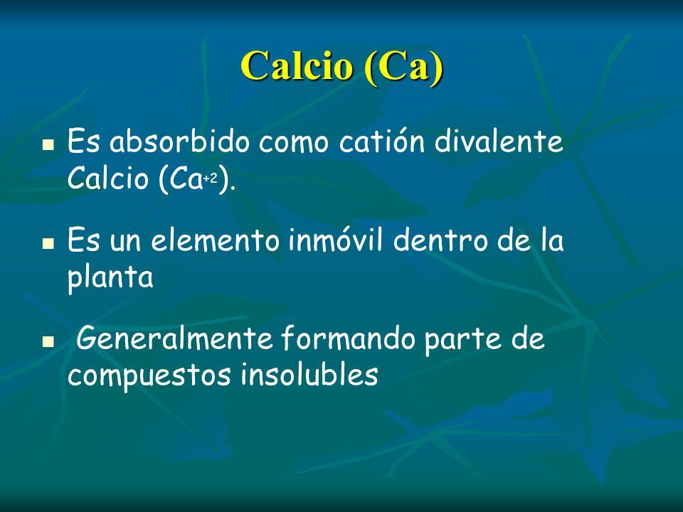 Calcio (Ca) Es absorbido como catión divalente Calcio (Ca +2 ). Es un elemento inmóvil dentro de la planta Generalmente formando parte de compuestos i