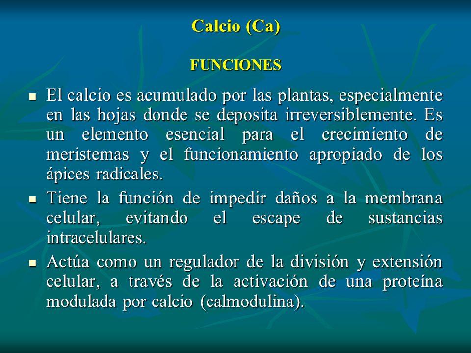 Calcio (Ca) FUNCIONES El calcio es acumulado por las plantas, especialmente en las hojas donde se deposita irreversiblemente. Es un elemento esencial