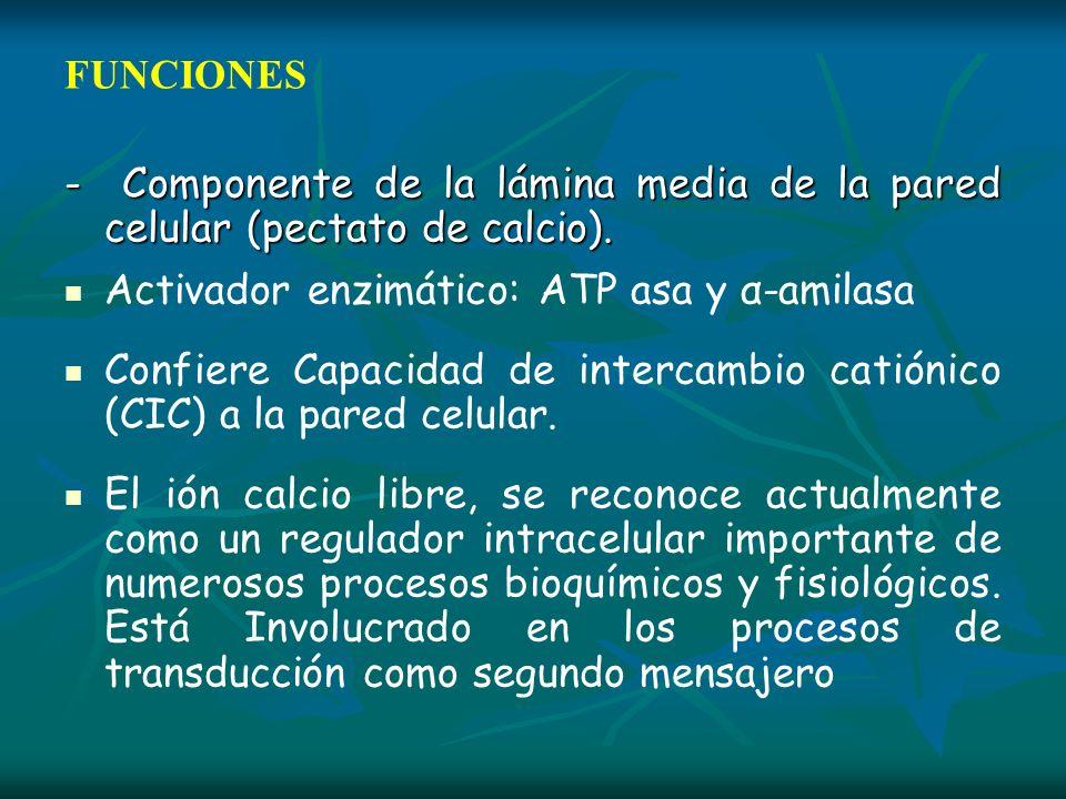 FUNCIONES - Componente de la lámina media de la pared celular (pectato de calcio). Activador enzimático: ATP asa y α-amilasa Confiere Capacidad de int