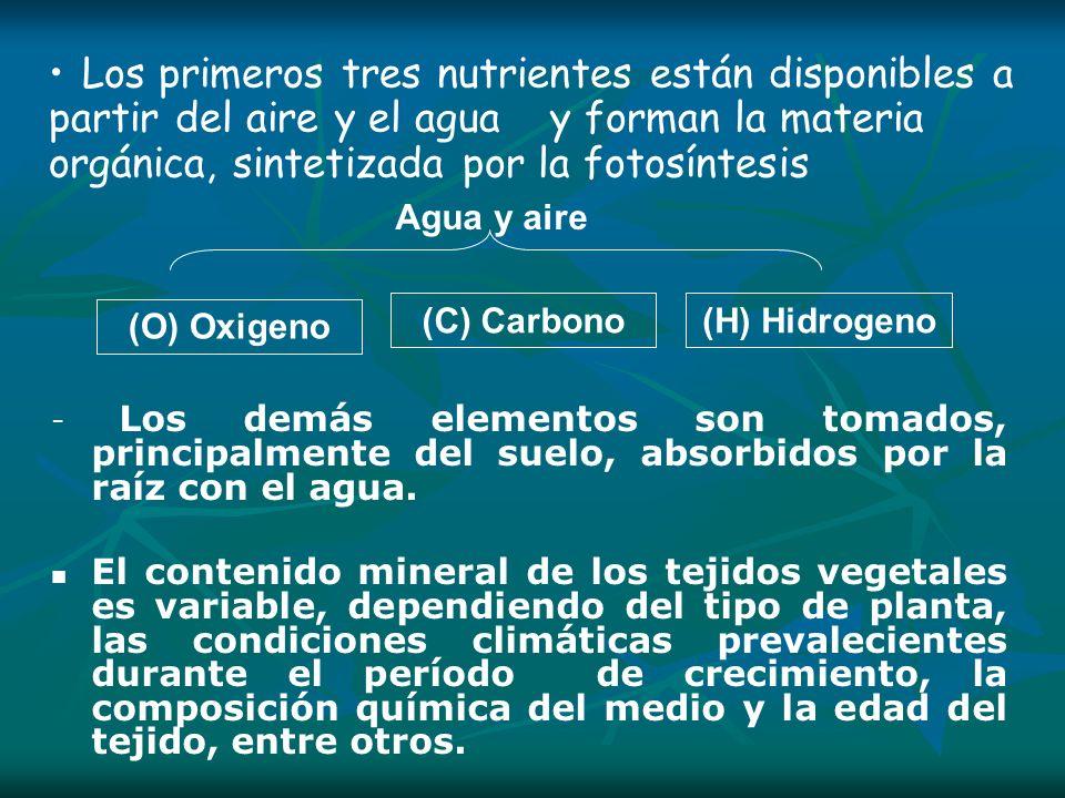 Nitrógeno (N) Se absorbe como: Nitrógeno orgánico Nitrógeno orgánico Nitrógeno inorgánico Nitrógeno inorgánico por fijación del nitrógeno atmosférico (N2) por fijación del nitrógeno atmosférico (N2) absorción en forma iónica: como nitrógeno amoniacal (NH4+) o como nitrato (NO3-) (predominantemente).