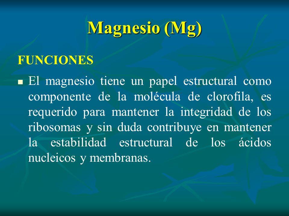 Magnesio (Mg) FUNCIONES El magnesio tiene un papel estructural como componente de la molécula de clorofila, es requerido para mantener la integridad d