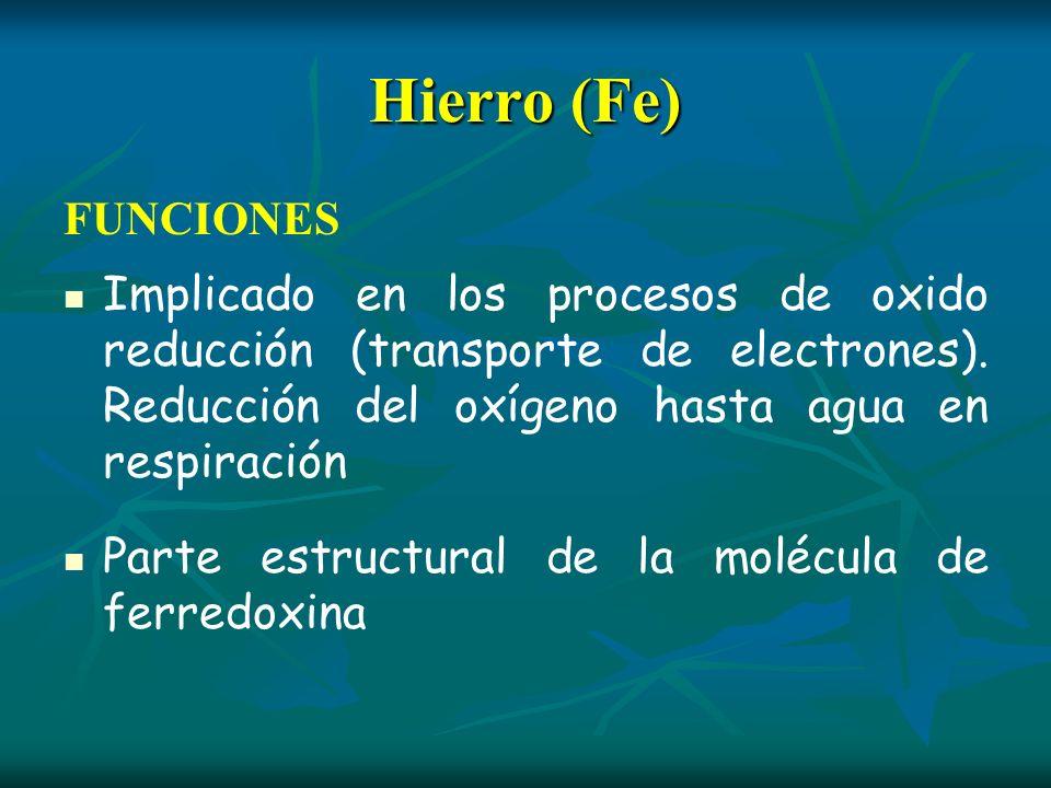 Hierro (Fe) FUNCIONES Implicado en los procesos de oxido reducción (transporte de electrones). Reducción del oxígeno hasta agua en respiración Parte e