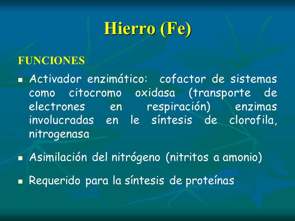 Hierro (Fe) FUNCIONES Activador enzimático: cofactor de sistemas como citocromo oxidasa (transporte de electrones en respiración) enzimas involucradas