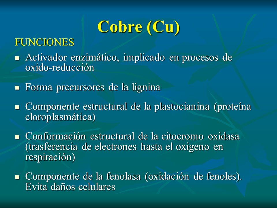 Cobre (Cu) FUNCIONES Activador enzimático, implicado en procesos de oxido-reducción Activador enzimático, implicado en procesos de oxido-reducción For