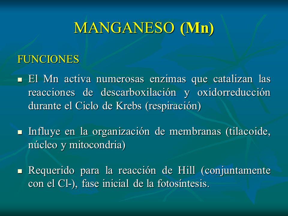 MANGANESO (Mn) FUNCIONES El Mn activa numerosas enzimas que catalizan las reacciones de descarboxilación y oxidorreducción durante el Ciclo de Krebs (
