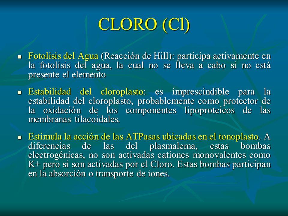 CLORO (Cl) Fotolisis del Agua (Reacción de Hill): participa activamente en la fotolisis del agua, la cual no se lleva a cabo si no está presente el el