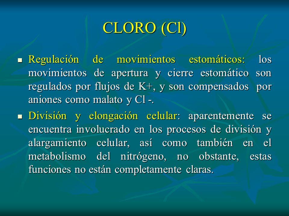CLORO (Cl) Regulación de movimientos estomáticos: los movimientos de apertura y cierre estomático son regulados por flujos de K+, y son compensados po