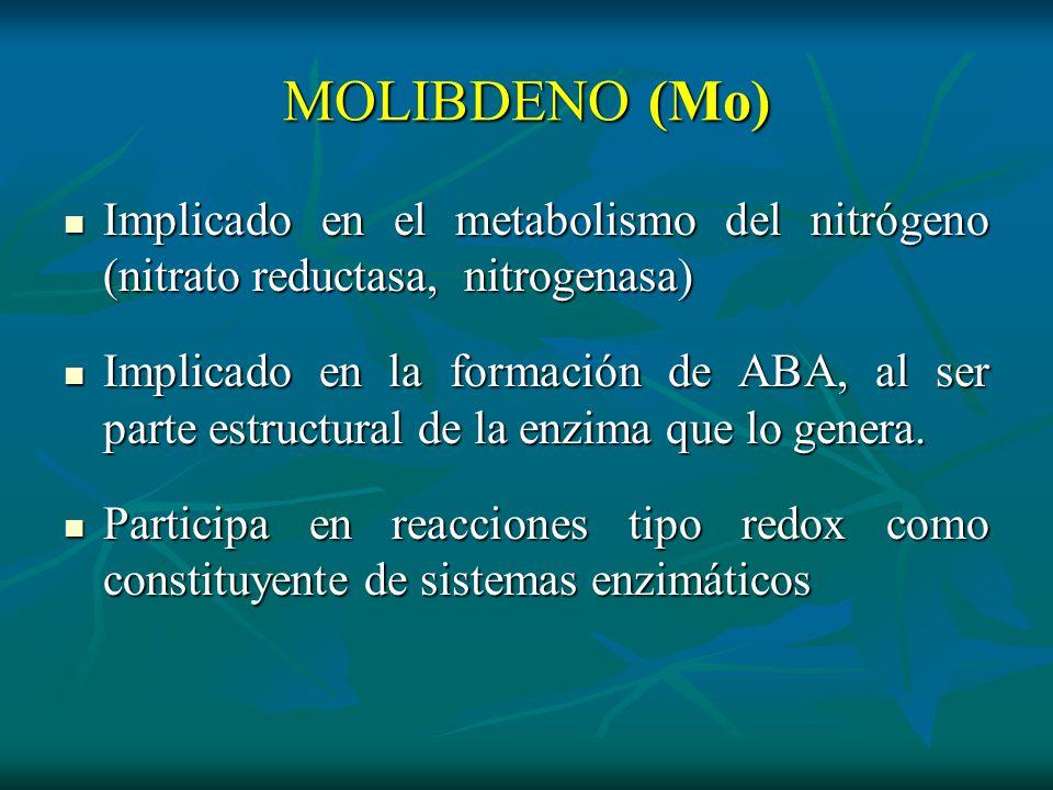 MOLIBDENO (Mo) Implicado en el metabolismo del nitrógeno (nitrato reductasa, nitrogenasa) Implicado en el metabolismo del nitrógeno (nitrato reductasa