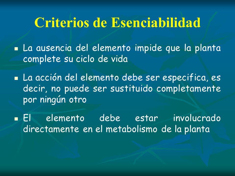 Clasificación de los Elementos Minerales MACRONUTRIENTESMICRONUTRIENTES Nitrógeno (N) Hierro (Fe) Fósforo (P) Cobre (Cu) Potasio (K) Zinc (Zn) Azufre (S) Cloro (Cl) Calcio (Ca) Manganeso (Mn) Magnesio (Mg) Boro (Bo) Molibdeno (Mo) *Silicio (Si) *Níquel (Ni) De acuerdo su contenido en la planta: