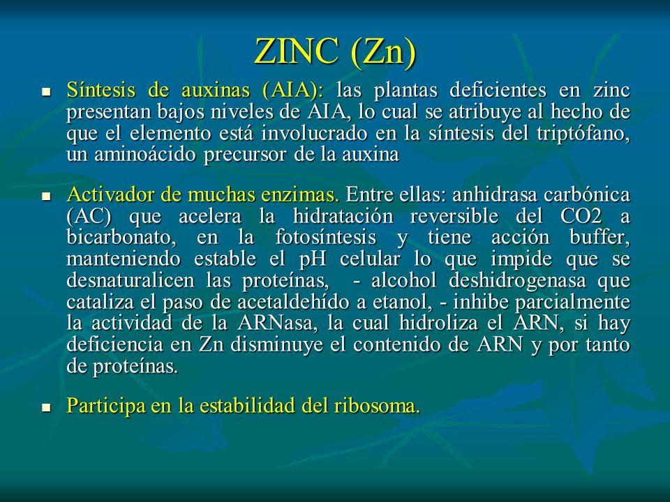 ZINC (Zn) Síntesis de auxinas (AIA): las plantas deficientes en zinc presentan bajos niveles de AIA, lo cual se atribuye al hecho de que el elemento e