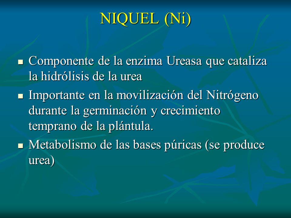 NIQUEL (Ni) Componente de la enzima Ureasa que cataliza la hidrólisis de la urea Componente de la enzima Ureasa que cataliza la hidrólisis de la urea