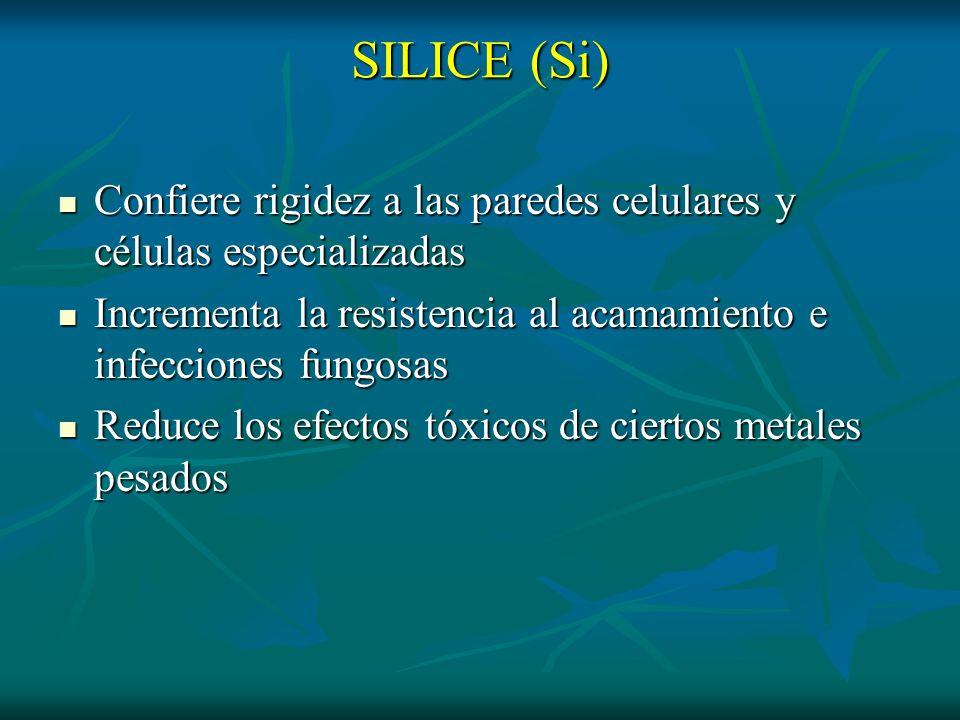 SILICE (Si) Confiere rigidez a las paredes celulares y células especializadas Confiere rigidez a las paredes celulares y células especializadas Increm