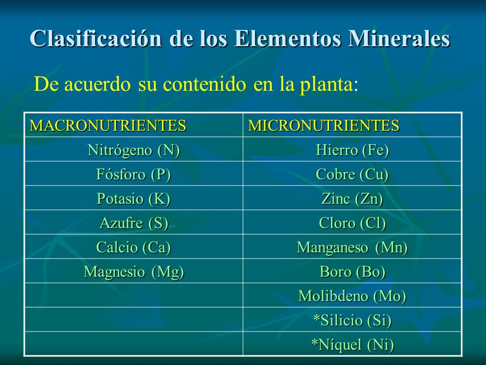 Clasificación de los Elementos Minerales MACRONUTRIENTESMICRONUTRIENTES Nitrógeno (N) Hierro (Fe) Fósforo (P) Cobre (Cu) Potasio (K) Zinc (Zn) Azufre