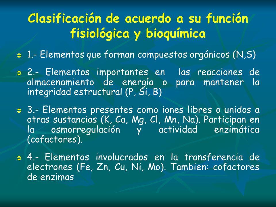 Azufre (S) FUNCIONES Componentes estructurales de las membranas celulares (proteinas ) Síntesis de aminoácidos (cisteina, metionina) y proteínas Componente estructural de la tiamina y biotina (coenzimas o vitaminas) Parte estructural del Acetil CoA (respiración)