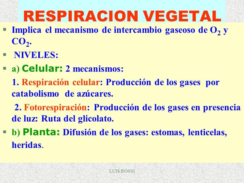 LUIS ROSSI RESPIRACION VEGETAL §Implica el mecanismo de intercambio gaseoso de O 2 y CO 2. § NIVELES: a) Celular: 2 mecanismos: 1. Respiración celular