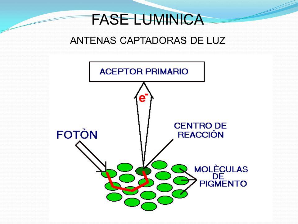 ANTENAS CAPTADORAS DE LUZ