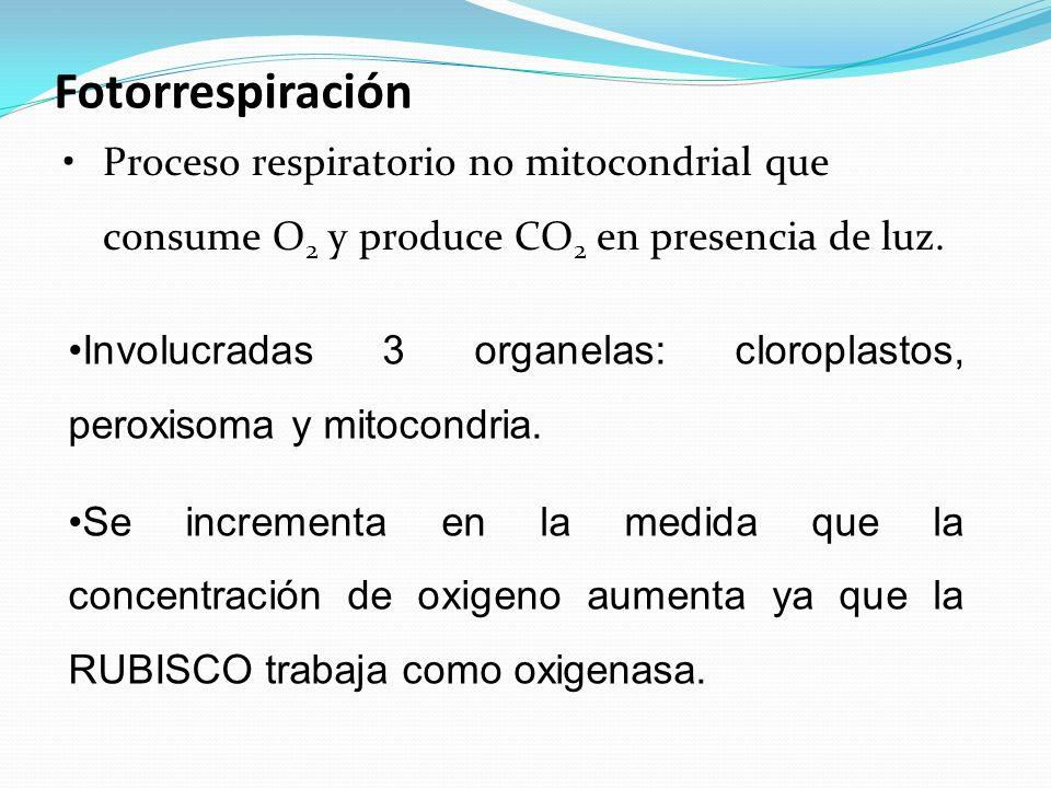 Fotorrespiración Involucradas 3 organelas: cloroplastos, peroxisoma y mitocondria.