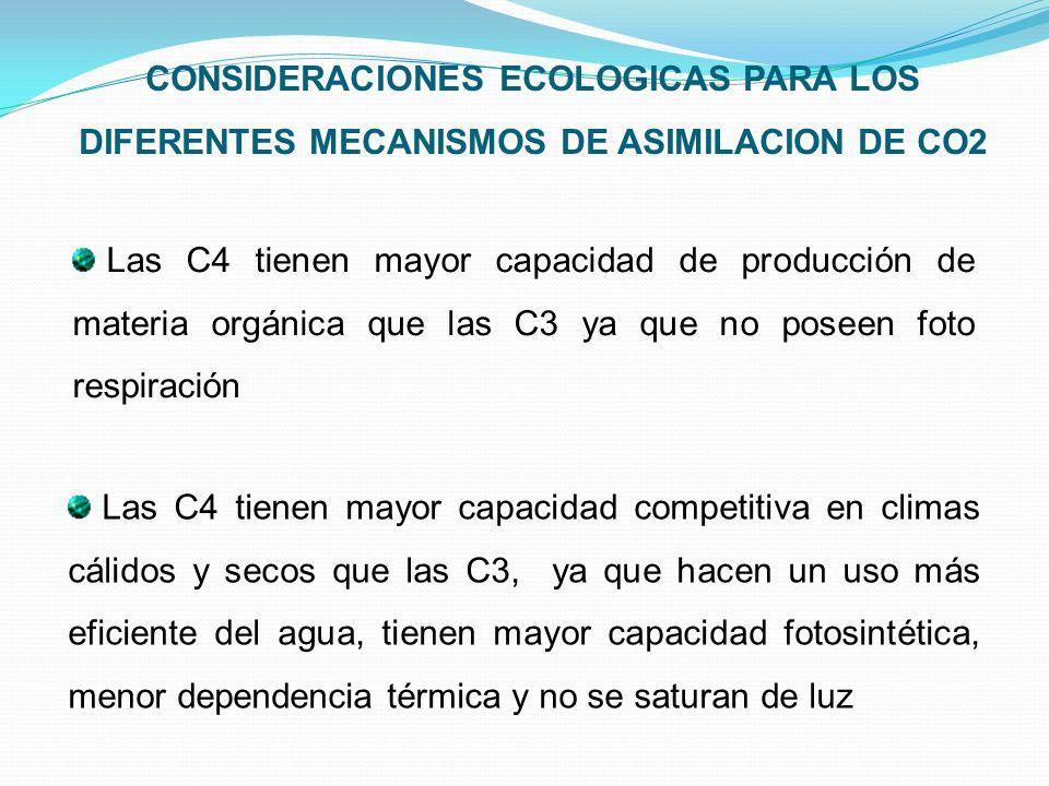 Las C4 tienen mayor capacidad de producción de materia orgánica que las C3 ya que no poseen foto respiración CONSIDERACIONES ECOLOGICAS PARA LOS DIFER