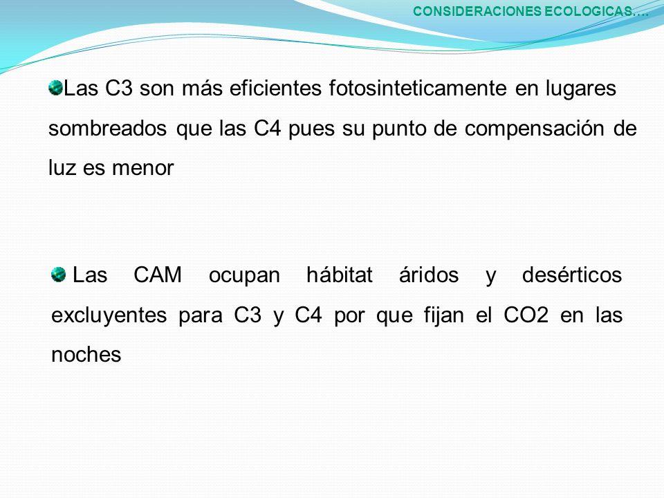 Las CAM ocupan hábitat áridos y desérticos excluyentes para C3 y C4 por que fijan el CO2 en las noches CONSIDERACIONES ECOLOGICAS…. Las C3 son más efi