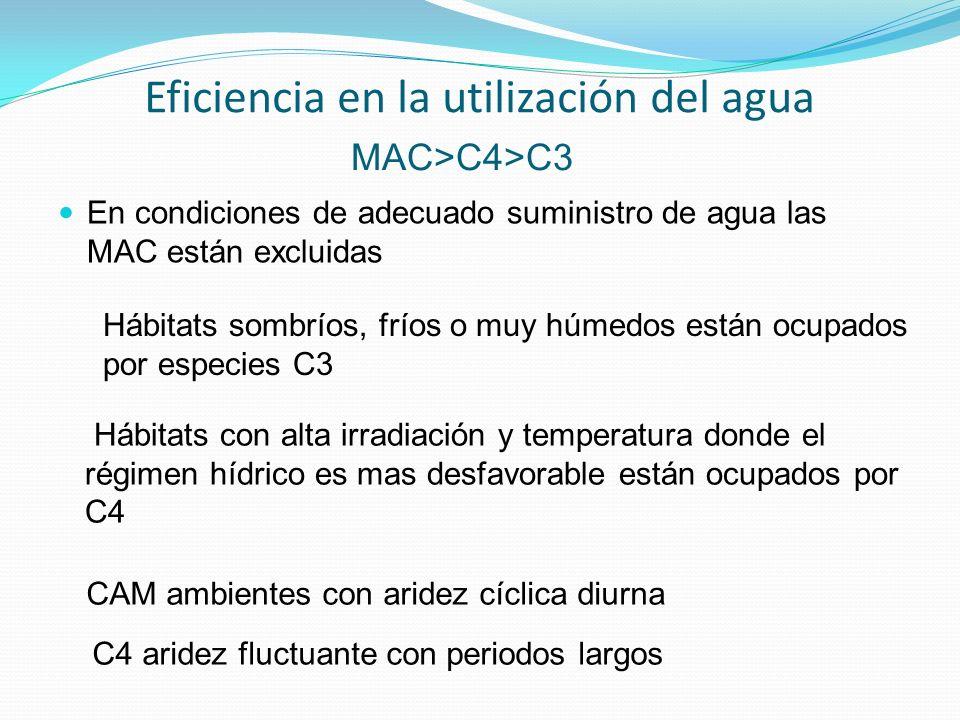 Eficiencia en la utilización del agua En condiciones de adecuado suministro de agua las MAC están excluidas MAC>C4>C3 C4 aridez fluctuante con periodos largos CAM ambientes con aridez cíclica diurna Hábitats con alta irradiación y temperatura donde el régimen hídrico es mas desfavorable están ocupados por C4 Hábitats sombríos, fríos o muy húmedos están ocupados por especies C3