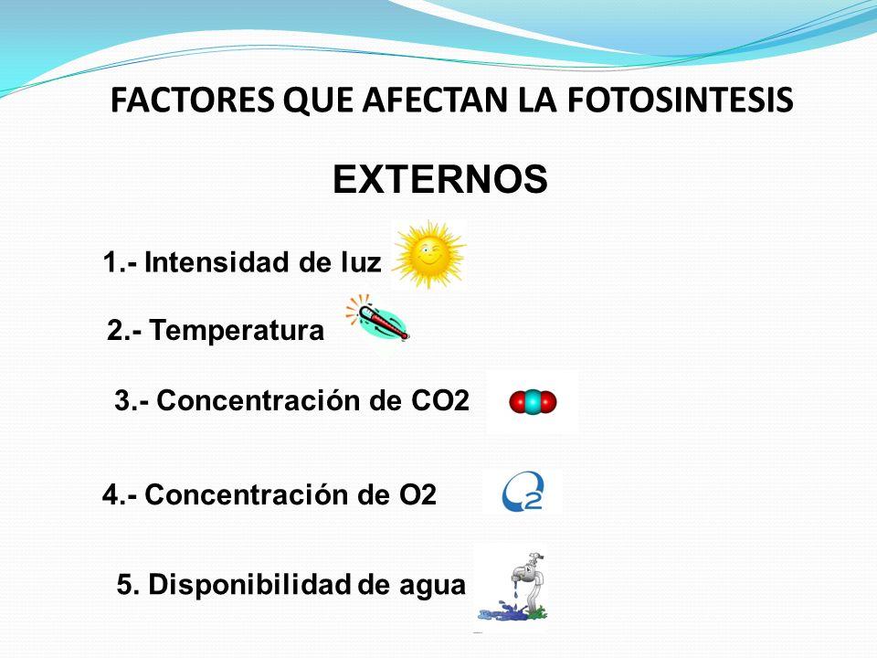 FACTORES QUE AFECTAN LA FOTOSINTESIS EXTERNOS 5. Disponibilidad de agua 4.- Concentración de O2 3.- Concentración de CO2 2.- Temperatura 1.- Intensida