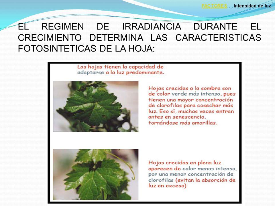 EL REGIMEN DE IRRADIANCIA DURANTE EL CRECIMIENTO DETERMINA LAS CARACTERISTICAS FOTOSINTETICAS DE LA HOJA: FACTORESFACTORES….