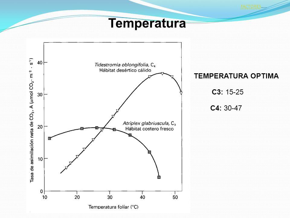 FACTORESFACTORES….. C3: 15-25 TEMPERATURA OPTIMA C4: 30-47 Temperatura