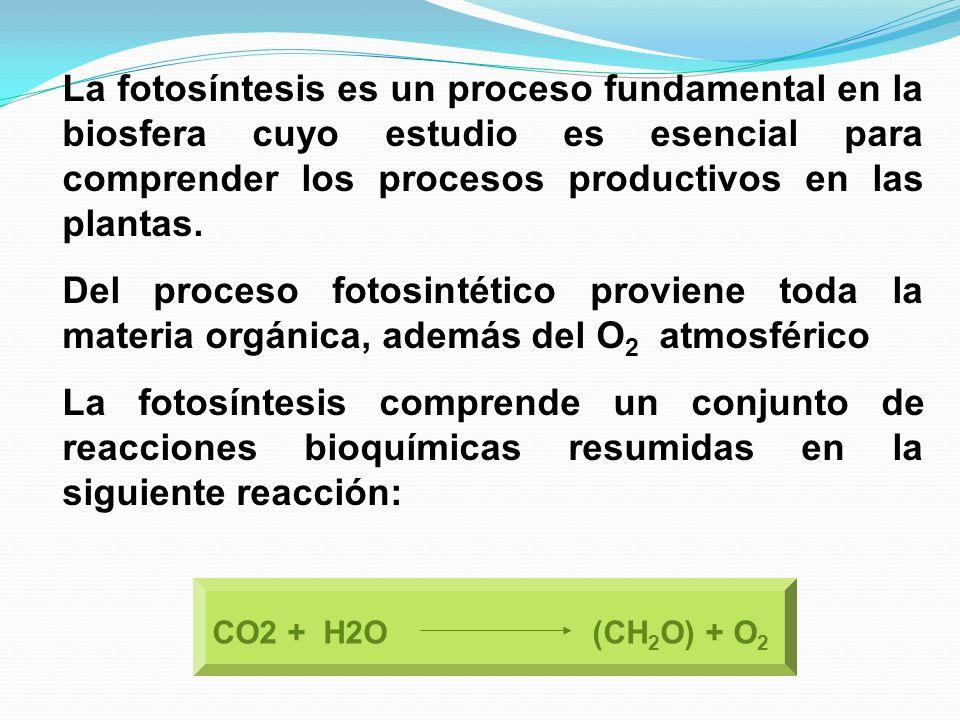 La fotosíntesis es un proceso fundamental en la biosfera cuyo estudio es esencial para comprender los procesos productivos en las plantas. Del proceso