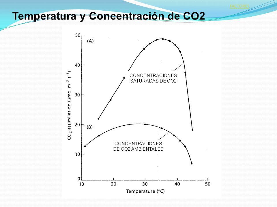 CONCENTRACIONES DE CO2 AMBIENTALES CONCENTRACIONES SATURADAS DE CO2 Temperatura y Concentración de CO2 FACTORESFACTORES…..