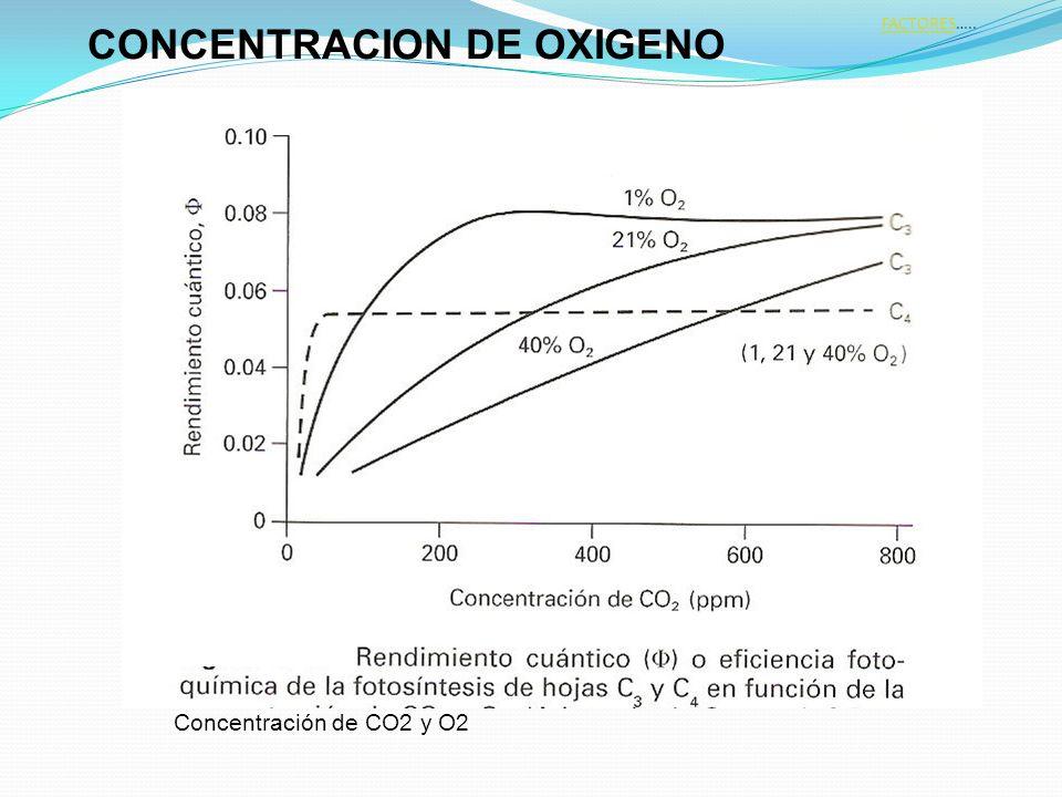 Concentración de CO2 y O2 CONCENTRACION DE OXIGENO FACTORESFACTORES…..