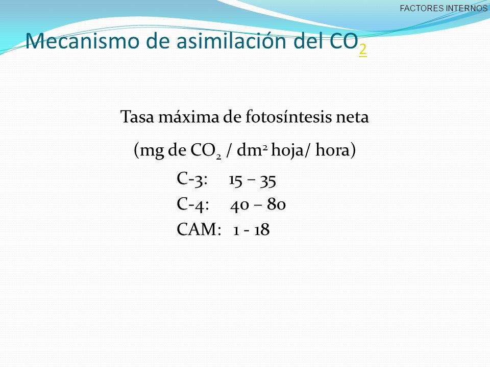 Mecanismo de asimilación del CO 2 2 Tasa máxima de fotosíntesis neta (mg de CO 2 / dm 2 hoja/ hora) C-3: 15 – 35 C-4: 40 – 80 CAM: 1 - 18 FACTORES INTERNOS