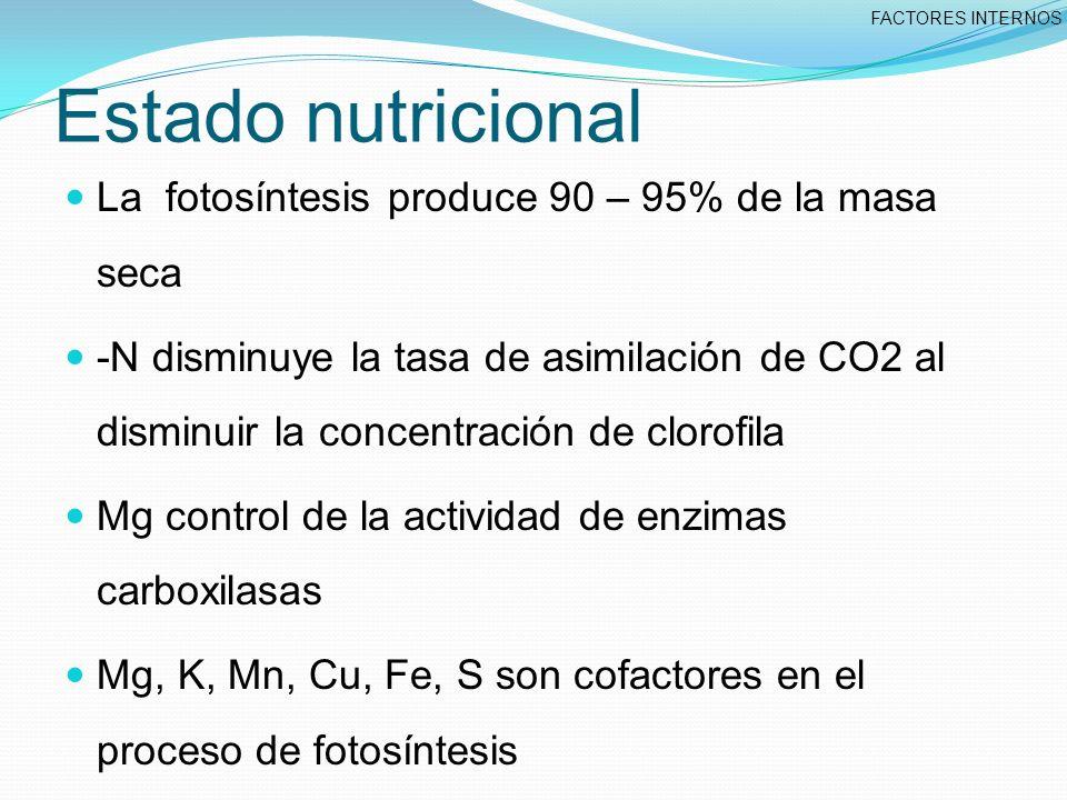 Estado nutricional La fotosíntesis produce 90 – 95% de la masa seca -N disminuye la tasa de asimilación de CO2 al disminuir la concentración de clorofila Mg control de la actividad de enzimas carboxilasas Mg, K, Mn, Cu, Fe, S son cofactores en el proceso de fotosíntesis FACTORES INTERNOS