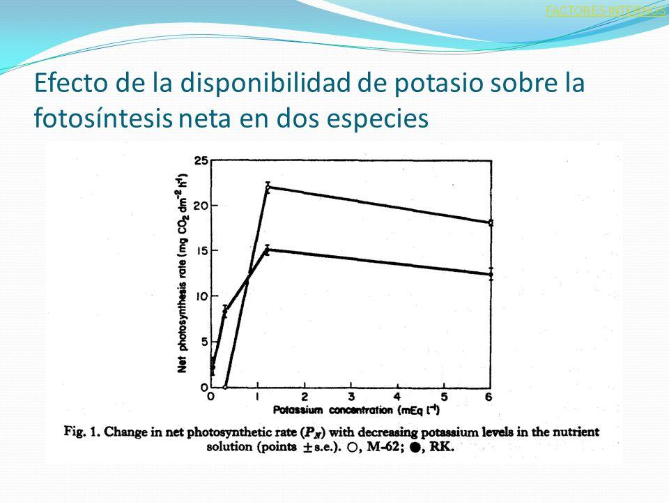 Efecto de la disponibilidad de potasio sobre la fotosíntesis neta en dos especies FACTORES INTERNOS