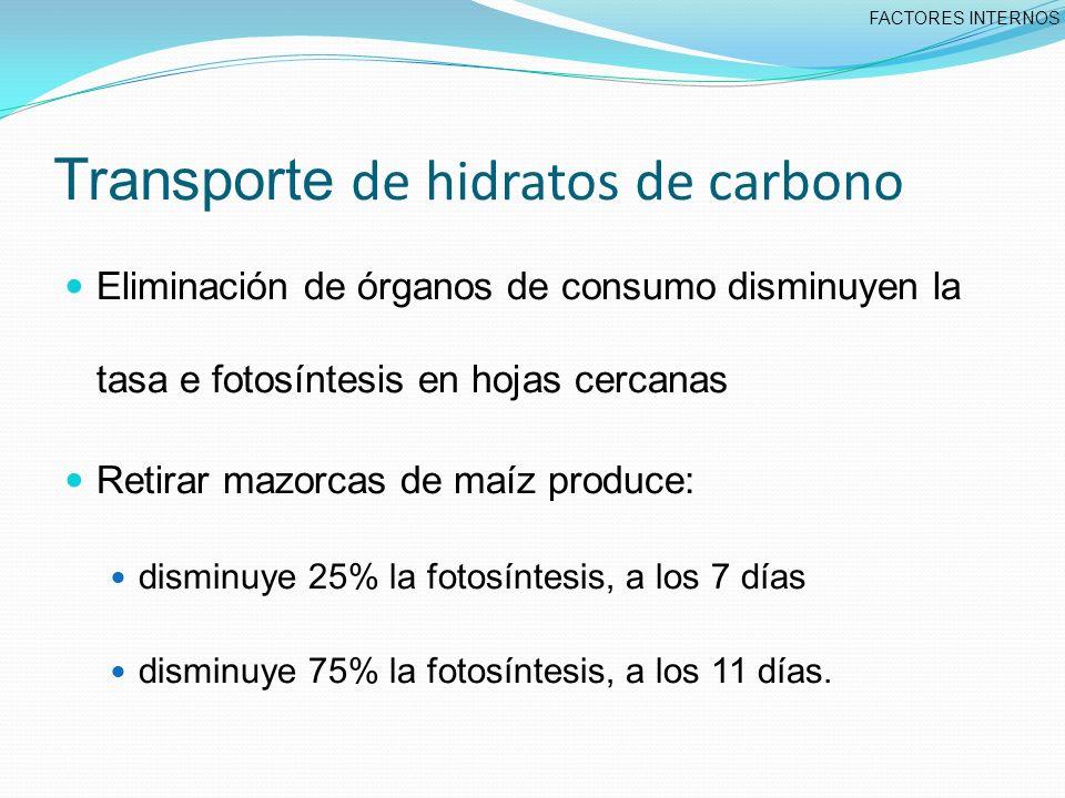 Transporte de hidratos de carbono Eliminación de órganos de consumo disminuyen la tasa e fotosíntesis en hojas cercanas Retirar mazorcas de maíz produce: disminuye 25% la fotosíntesis, a los 7 días disminuye 75% la fotosíntesis, a los 11 días.