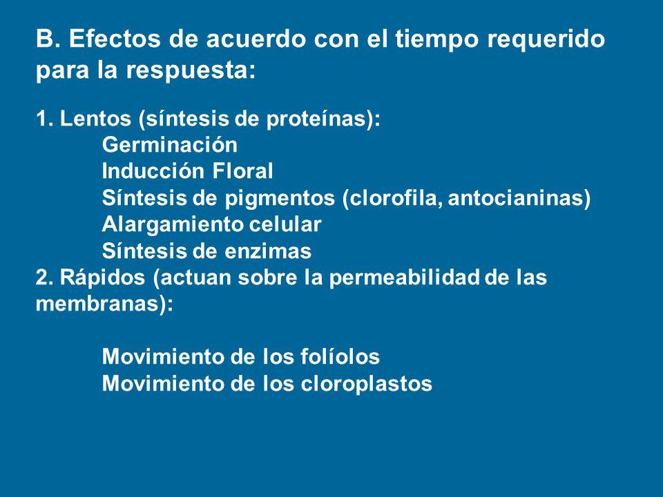 B. Efectos de acuerdo con el tiempo requerido para la respuesta: 1. Lentos (síntesis de proteínas): Germinación Inducción Floral Síntesis de pigmentos