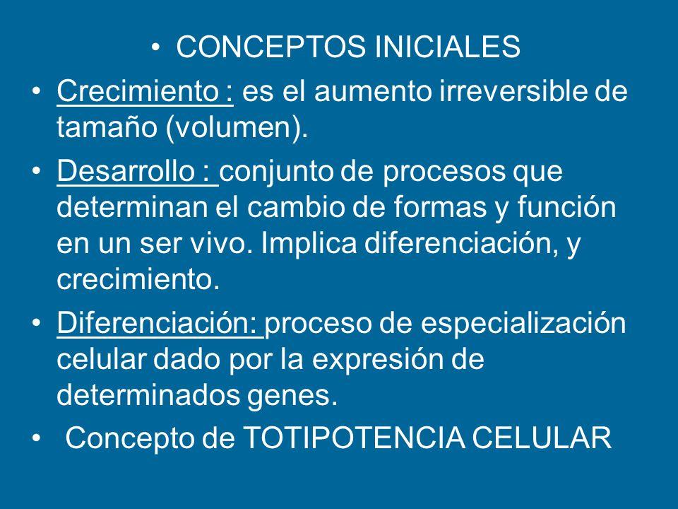 CONCEPTOS INICIALES Crecimiento : es el aumento irreversible de tamaño (volumen). Desarrollo : conjunto de procesos que determinan el cambio de formas