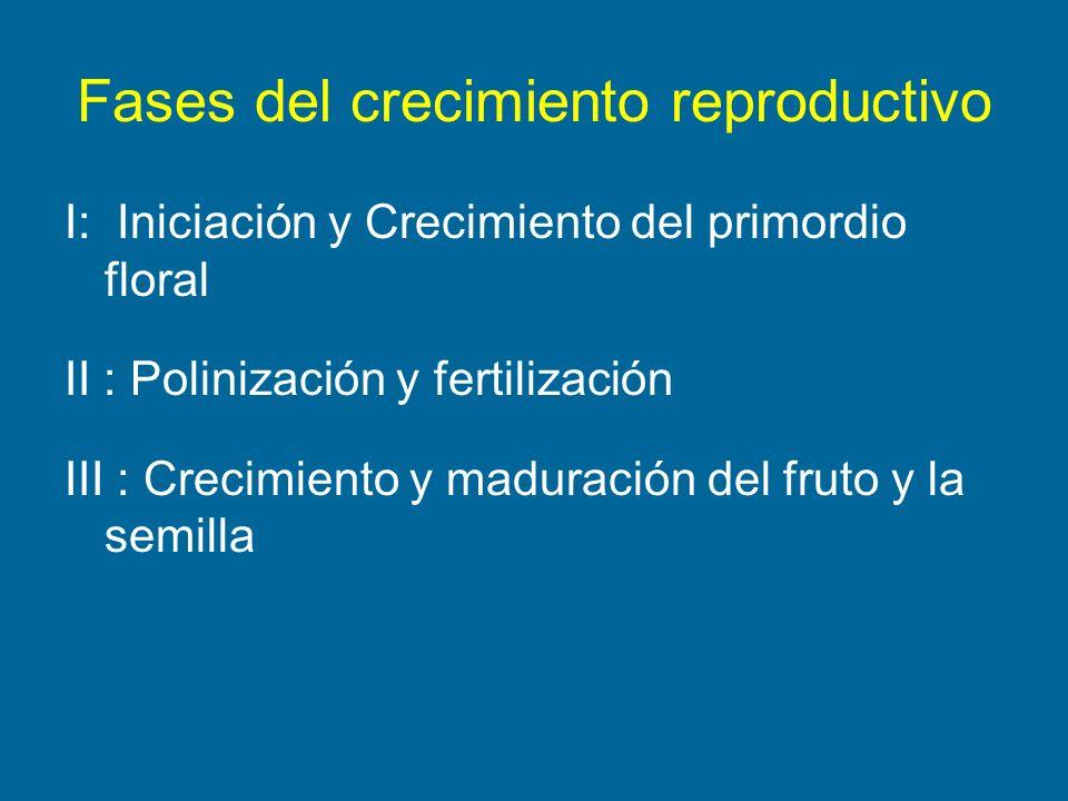 Fases del crecimiento reproductivo I: Iniciación y Crecimiento del primordio floral II : Polinización y fertilización III : Crecimiento y maduración d