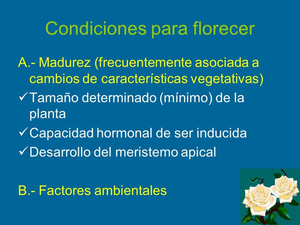 Condiciones para florecer A.- Madurez (frecuentemente asociada a cambios de características vegetativas) Tamaño determinado (mínimo) de la planta Capa