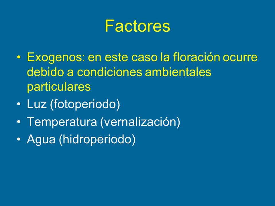 Factores Exogenos: en este caso la floración ocurre debido a condiciones ambientales particulares Luz (fotoperiodo) Temperatura (vernalización) Agua (