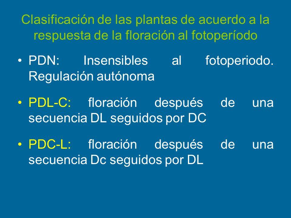 Clasificación de las plantas de acuerdo a la respuesta de la floración al fotoperíodo PDN: Insensibles al fotoperiodo. Regulación autónoma PDL-C: flor