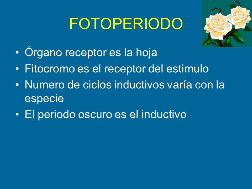 FOTOPERIODO Órgano receptor es la hoja Fitocromo es el receptor del estimulo Numero de ciclos inductivos varía con la especie El periodo oscuro es el