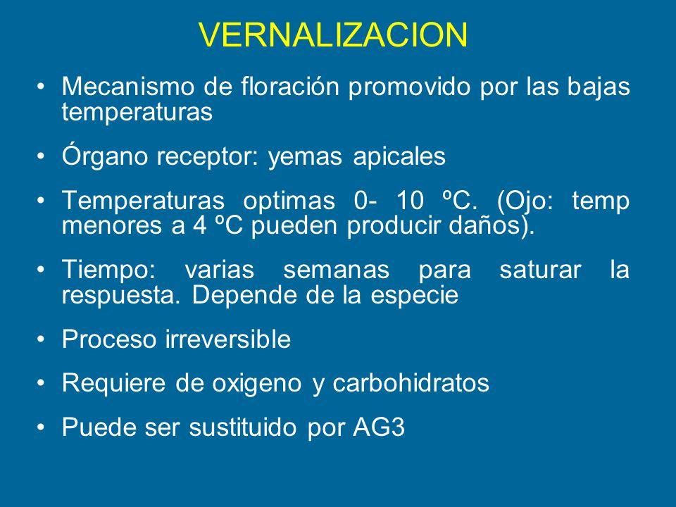 VERNALIZACION Mecanismo de floración promovido por las bajas temperaturas Órgano receptor: yemas apicales Temperaturas optimas 0- 10 ºC. (Ojo: temp me