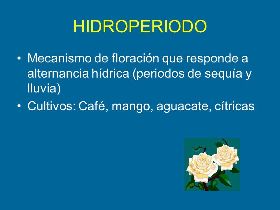 HIDROPERIODO Mecanismo de floración que responde a alternancia hídrica (periodos de sequía y lluvia) Cultivos: Café, mango, aguacate, cítricas